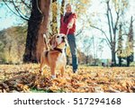 Stock photo man walks with dog in autumn park at sunny day 517294168