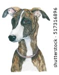 Whippet. Dog Watercolor. Breed...