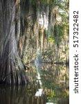 classic bayou swamp scene of... | Shutterstock . vector #517322482