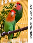 Small photo of two beautiful green parrots lovebirds agapornis in gold cage