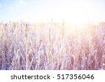 snowfall in the field. bush...   Shutterstock . vector #517356046