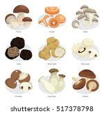 vector set of edible mushrooms | Shutterstock .eps vector #517378798