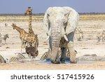 Wild Animals  Zebras Elephants...
