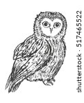 owl hand drawn  black and white ... | Shutterstock . vector #517465522