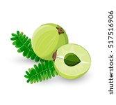 amla fruit vector illustration. ... | Shutterstock .eps vector #517516906