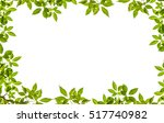 Tree Leaf Frame On White...