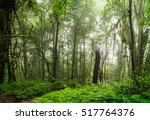 rain forest in the mist  foggy... | Shutterstock . vector #517764376