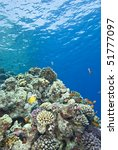the shallows of a tropical... | Shutterstock . vector #51777097