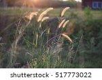 the grass under the sun | Shutterstock . vector #517773022