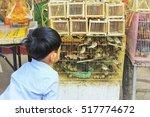 the boys are looking birds... | Shutterstock . vector #517774672