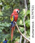 bright large tropical parrot... | Shutterstock . vector #51797521