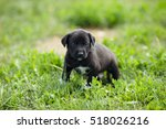 little puppy on a background of ... | Shutterstock . vector #518026216