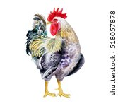 watercolor drawing of rooster... | Shutterstock . vector #518057878