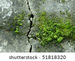 Old Wall With Moss