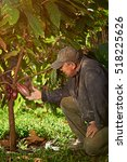 One Farmer Man With Cacao Tree...