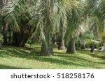 green  tropical palm forest | Shutterstock . vector #518258176