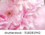 Double Flowered Cherry Tree