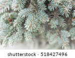 Winter Pine Branch. Snowflakes...