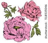 hand drawing peonies. vector... | Shutterstock .eps vector #518535046