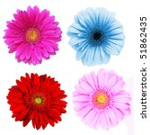 perfect spring daisies... | Shutterstock . vector #51862435