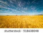 Field Of Golden Wheat Under The ...