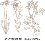detailed plant sketch | Shutterstock .eps vector #518790982