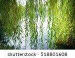 branches of weeping willow near ... | Shutterstock . vector #518801608