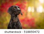 Black Dog Portrait In Colorful...