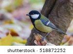 great tit  parus major  | Shutterstock . vector #518872252