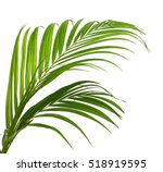 green leaves of palm tree... | Shutterstock . vector #518919595