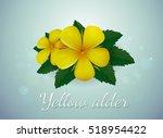 flower plumeria illustration... | Shutterstock .eps vector #518954422
