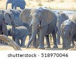 Herd Of Elephants Standing Nea...