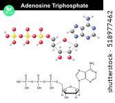 adenosine triphosphate...   Shutterstock . vector #518977462