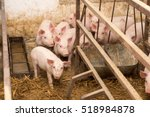 Little Pigs In The Pen