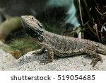 dragon | Shutterstock . vector #519054685