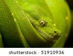Постер, плакат: a green snake on