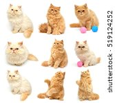 Stock photo collection beautiful kitten isolated on white background persian cat 519124252
