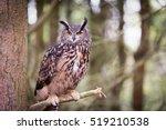 Stock photo eurasian eagle owl 519210538