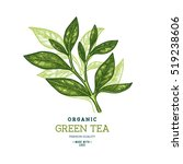 tea leaf design template.... | Shutterstock .eps vector #519238606