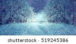 winter night in the park | Shutterstock . vector #519245386