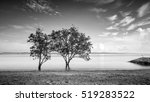 Small photo of Beautiful minimalist black and white seascape with standing trees. Shot taken in daytime with long exposure