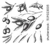 olive sketch element collection ...   Shutterstock .eps vector #519323035