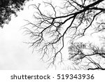 bare tree branches on a pale... | Shutterstock . vector #519343936