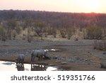 Rare Black Rhinos Drinking Fro...