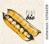 peas vector illustration. hand...   Shutterstock .eps vector #519366358