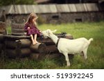 Little Girl Feeding A Goat...