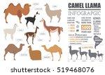 camel  llama  guanaco  alpaca ... | Shutterstock .eps vector #519468076