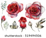 Stock photo set vintage watercolor elements of red rose collection garden flowers leaves illustration 519494506