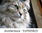 Portrait Of A Siberian Female...
