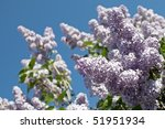 lilac | Shutterstock . vector #51951934